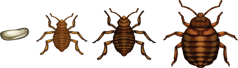 Bed Bug St. Louis in St. Louis, Missouri Offers Bed Bug Eradication Services Using Heat Treatment, Which Kills Bed Bugs at All Stages