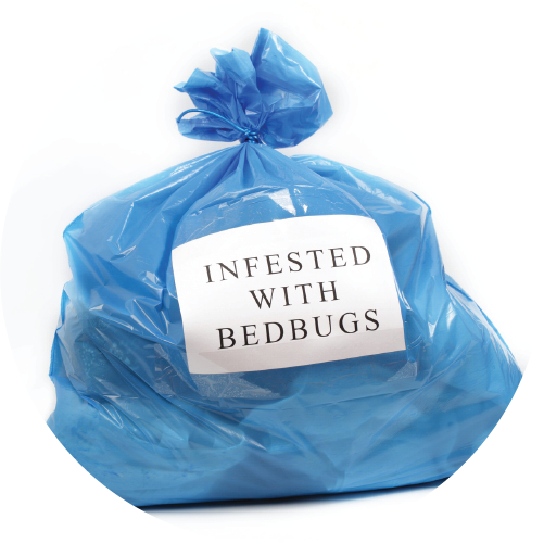 Bed Bug St. Louis in St. Louis, Missouri Provides Home and Travel Tips to Prevent Future Bed Bugs